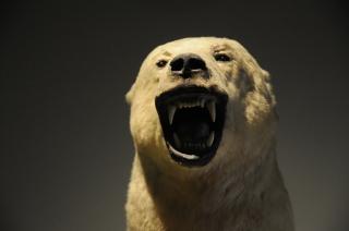 Museum Bear